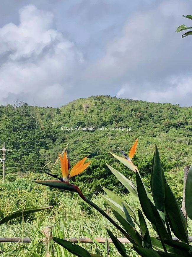 南の島へ行ってきました*2018②*3日目♪_d0367763_20353372.jpg
