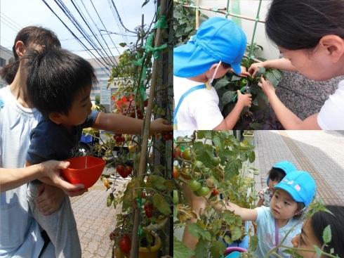 【千葉新田町園】菜園活動とピザ作り_a0267292_09401482.jpg