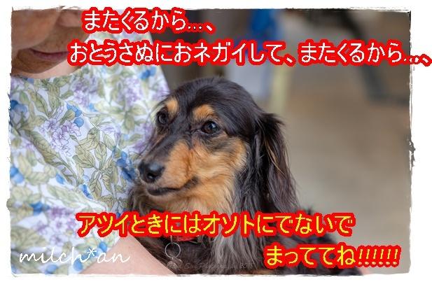 b0115642_12351036.jpg