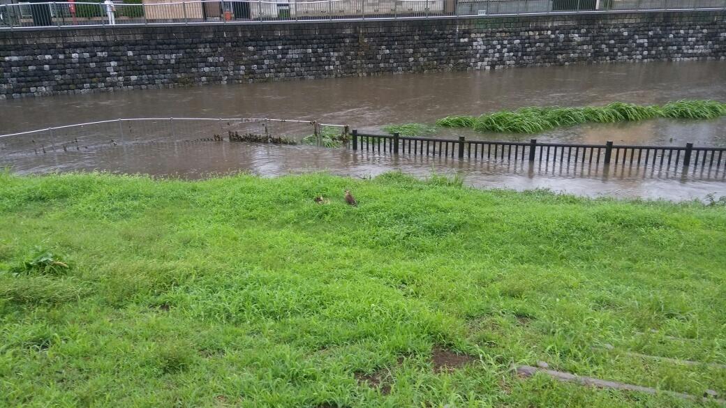 大雨洪水注意報_e0232277_15111238.jpg