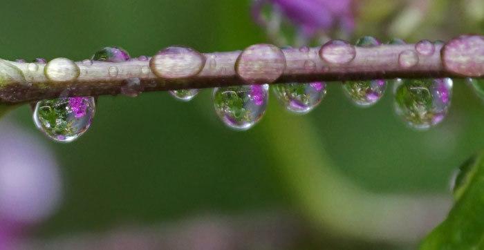 またまた水滴_d0162994_12525201.jpg