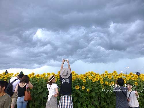 ひまわりと土砂降り雷雨と……(◎д◎)_d0128697_8551960.jpg