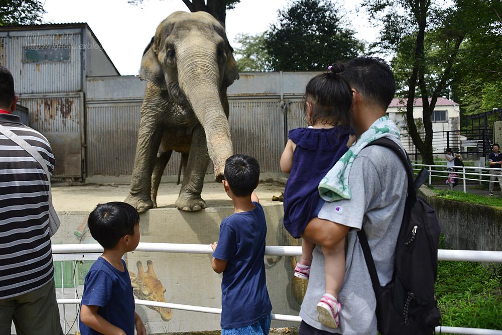 2018.8.15 みんなで愉しむ宇都宮動物園♬_f0250322_20392094.jpg