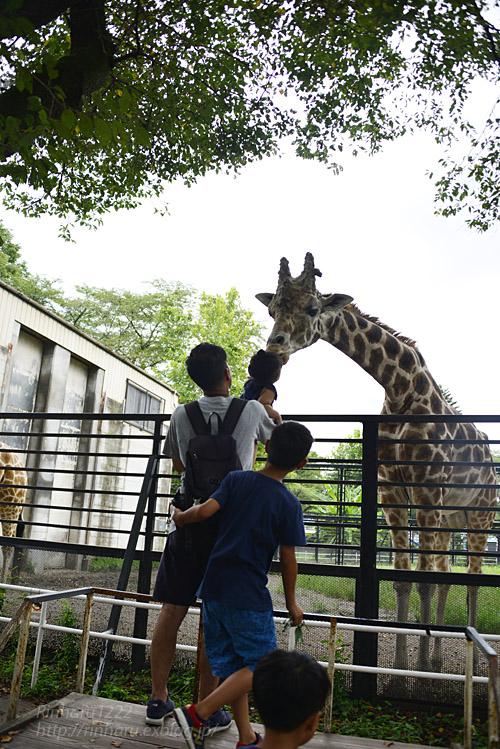 2018.8.15 みんなで愉しむ宇都宮動物園♬_f0250322_20395317.jpg
