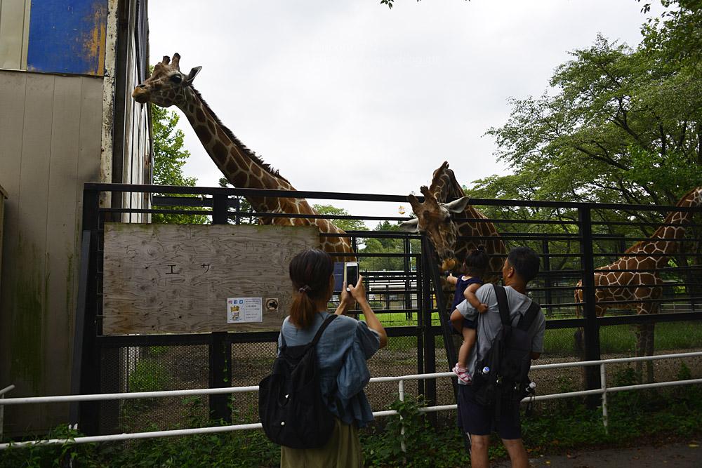 2018.8.15 みんなで愉しむ宇都宮動物園♬_f0250322_2040512.jpg