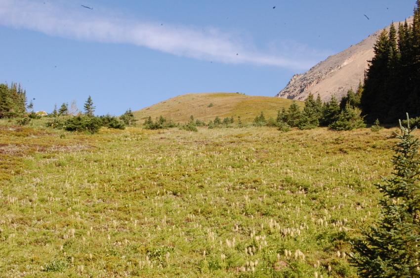気軽に行ける絶景ハイキング ターミガンサーク_d0112928_11154565.jpg