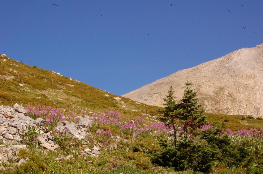 気軽に行ける絶景ハイキング ターミガンサーク_d0112928_11160212.jpg