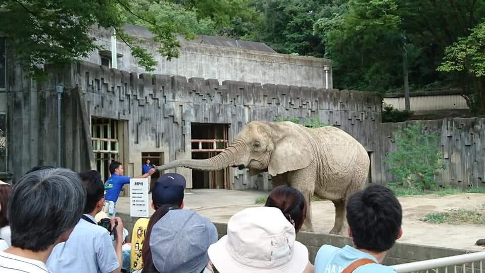 東山動物園 ナイトズー2018_f0373339_958370.jpg