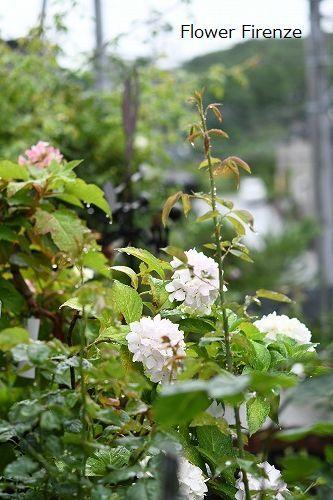 *お盆の庭は・・・*_e0159050_17521094.jpg