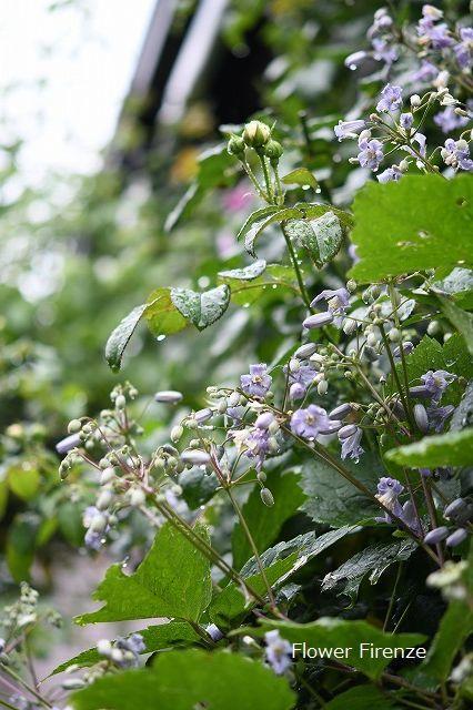 *お盆の庭は・・・*_e0159050_17523830.jpg