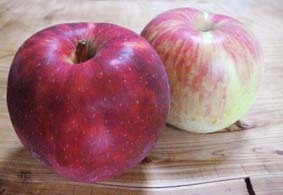 安曇野のリンゴ園より産直です。サンつがる2018セレクト、ご予約を始めました_b0126182_12071051.jpg