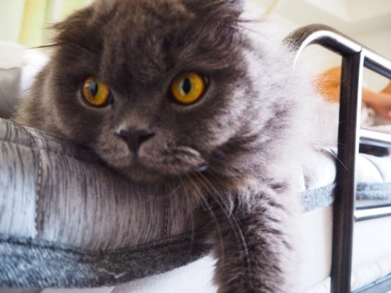 猫ちぐら_a0258686_14201878.jpg