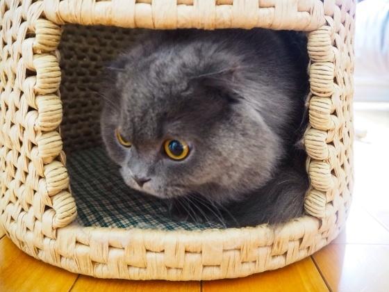 猫ちぐら_a0258686_14264092.jpg