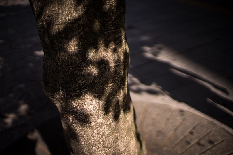 Shadows Carved By Afternoon Light And Boulevard Trees_d0353489_22422627.jpg