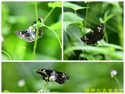 お盆休み  関東編_d0285540_06034485.jpg