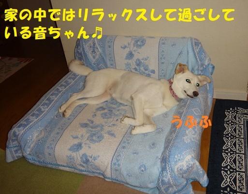 f0121712_11160932.jpg