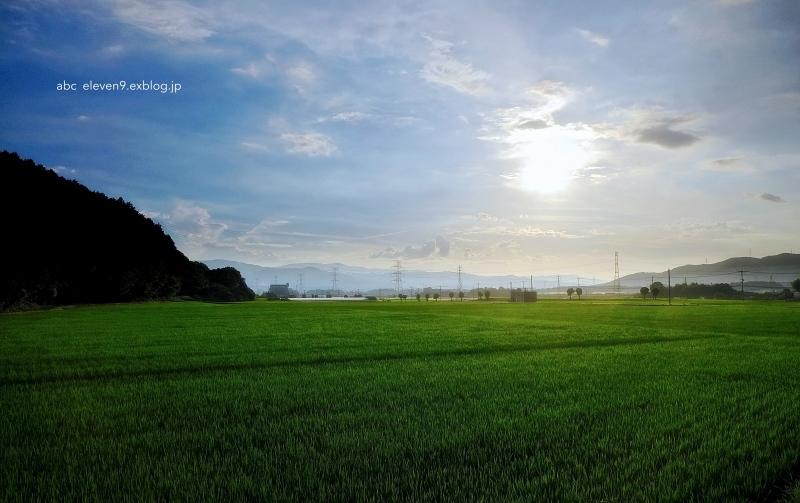 真夏の田園_f0315034_14104933.jpg