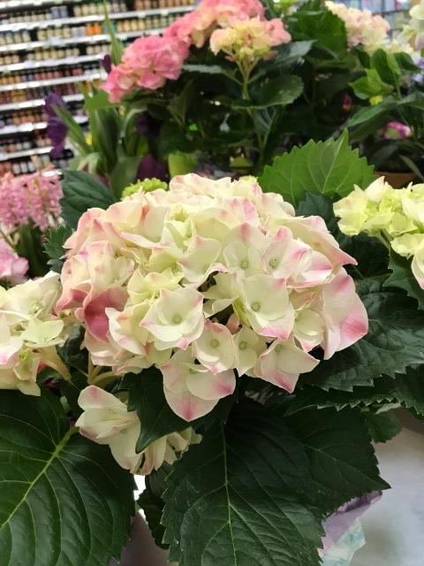 花屋さんにて♪_f0298539_22561184.jpg