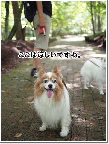 d0013149_00402797.jpg