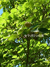 b0224081_12471422.png