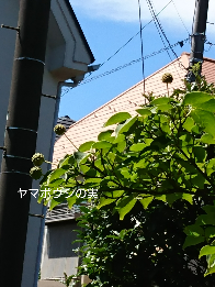 b0224081_12473081.png