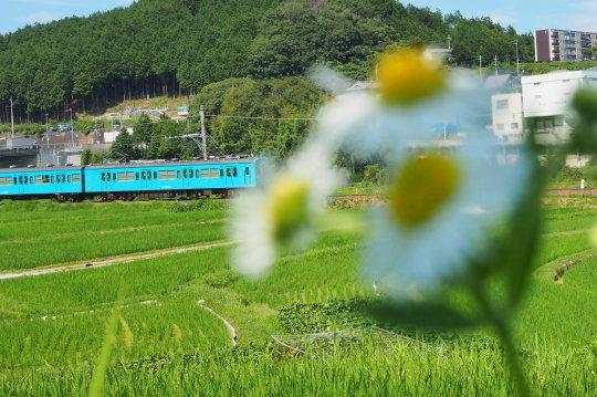 JR和歌山線とカフェタイム_f0266284_16091753.jpg