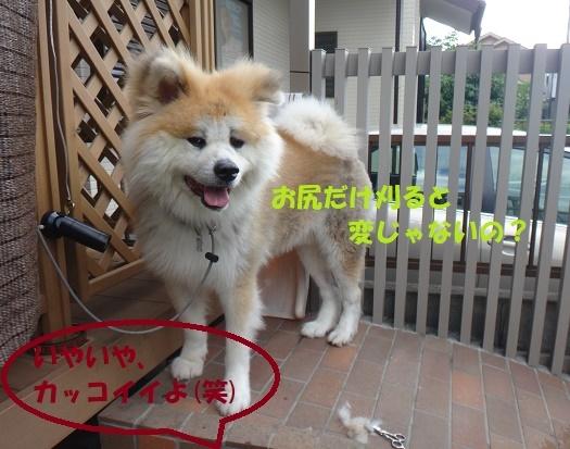f0121712_15580786.jpg