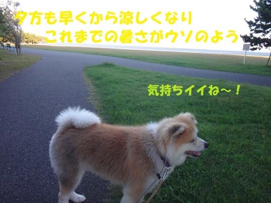 f0121712_16411365.jpg
