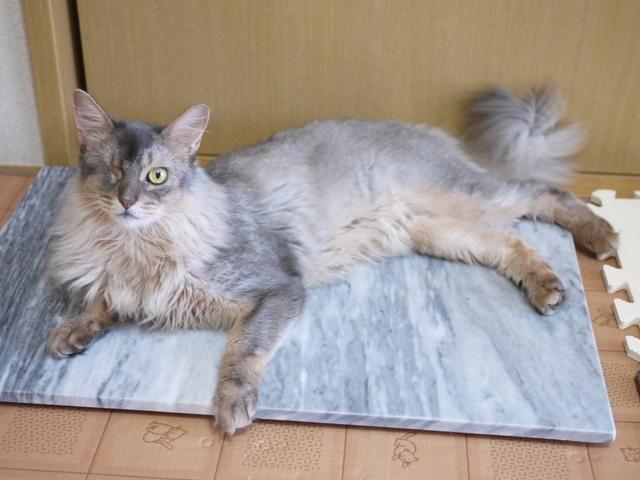 猫のお留守番 るうくん編。_a0143140_22220071.jpg