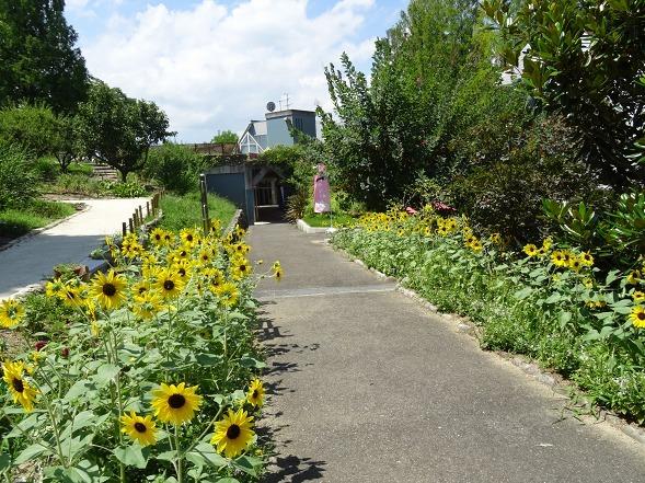 大阪府立花の文化園の花_b0299042_15123913.jpg