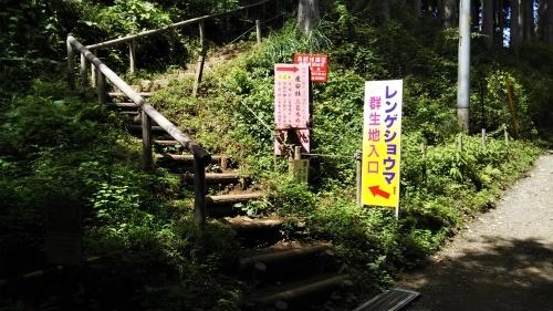 山登り②御岳山  楽チンコース_e0341099_09530579.jpg
