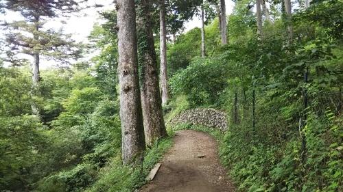 山登り②御岳山  楽チンコース_e0341099_09550975.jpg