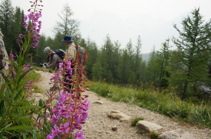 山岳救助の一部始終を見た ラーチバレー_d0112928_03093356.jpg
