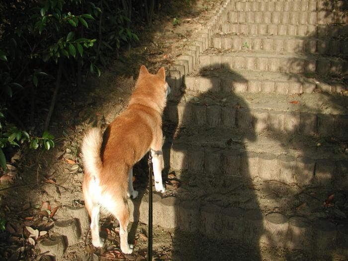 久しぶりにカメラをもって朝散歩_a0063148_10370269.jpg