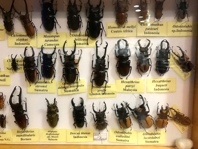 パドヴァの昆虫博物館 Esapolis_a0087957_01322895.jpg