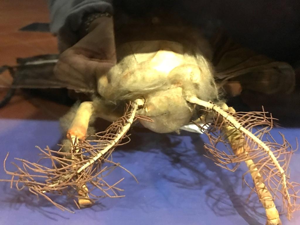 パドヴァの昆虫博物館 Esapolis_a0087957_01322904.jpg