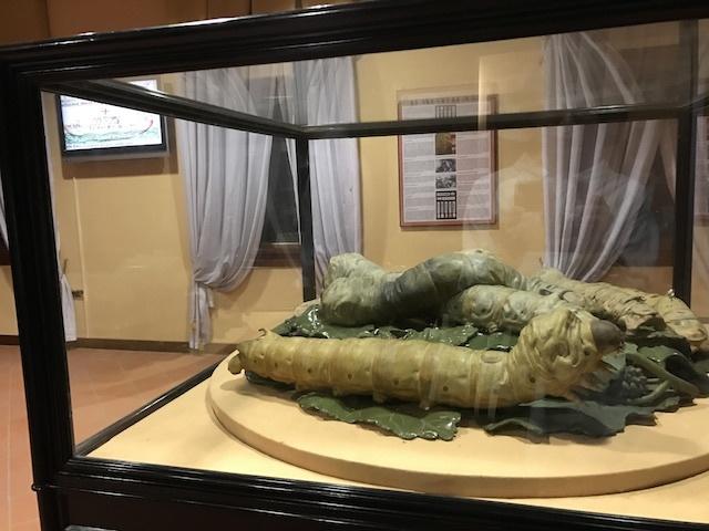 パドヴァの昆虫博物館 Esapolis_a0087957_01323009.jpg