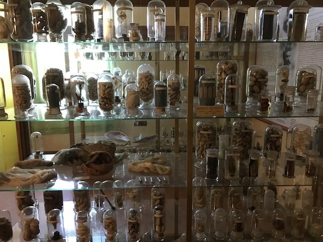 パドヴァの昆虫博物館 Esapolis_a0087957_01323023.jpg