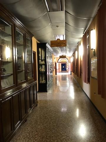 パドヴァの昆虫博物館 Esapolis_a0087957_01323058.jpg