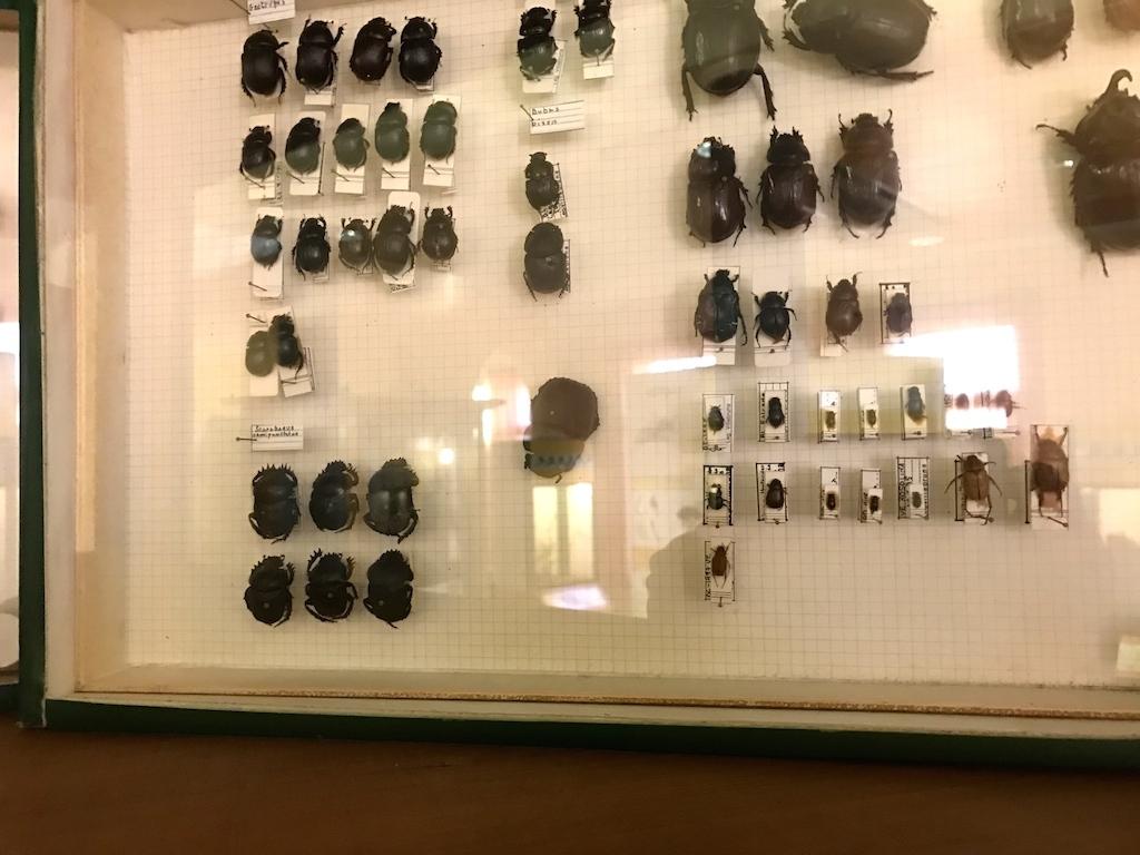 パドヴァの昆虫博物館 Esapolis_a0087957_01323919.jpg