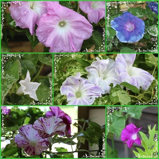 b0364186_20112921.jpg