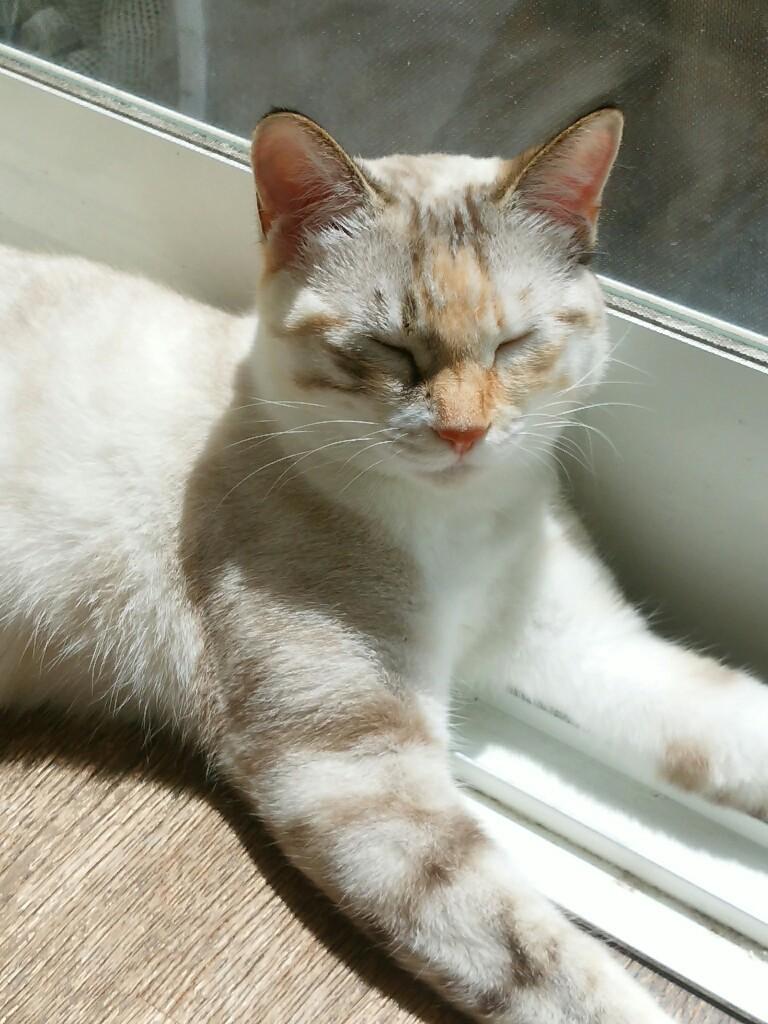 猫三昧_f0255704_12040358.jpg