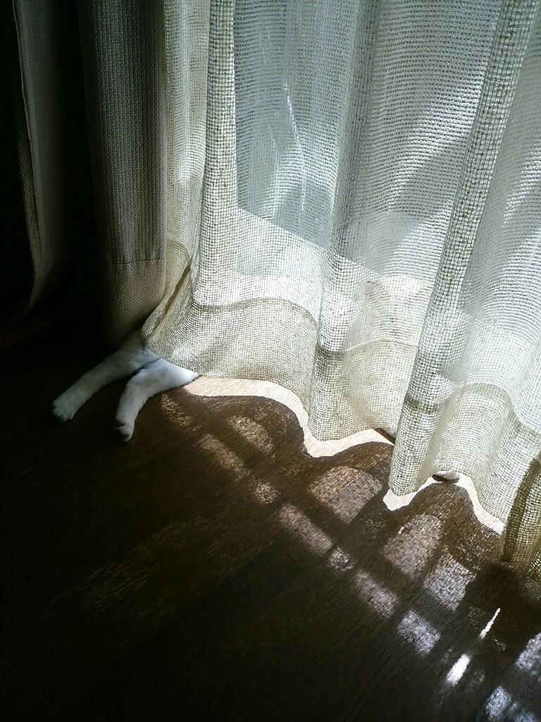 猫三昧_f0255704_12054382.jpg