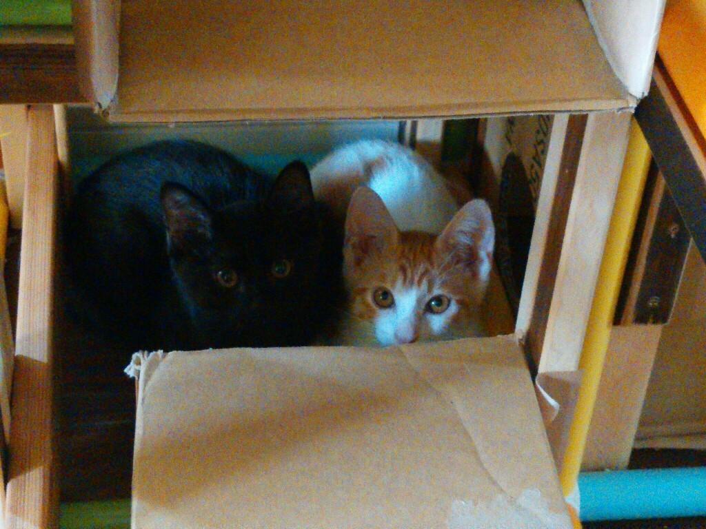 猫三昧_f0255704_12054445.jpg