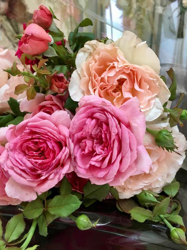 真夏の薔薇に感謝  HT  Rose 「 魅惑 」_c0195496_11474504.jpg