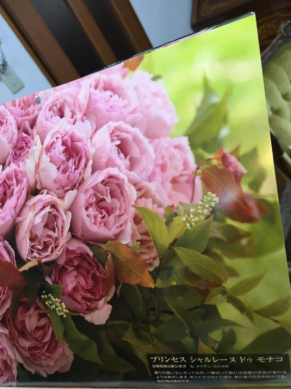 真夏の薔薇に感謝  HT  Rose 「 魅惑 」_c0195496_12262478.jpg