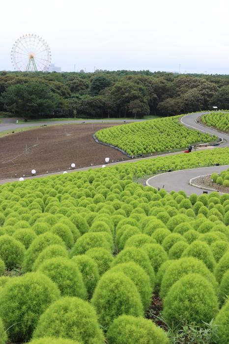 【ひたち海浜公園】埼玉ー茨城 - 6 -_f0348831_21454418.jpg