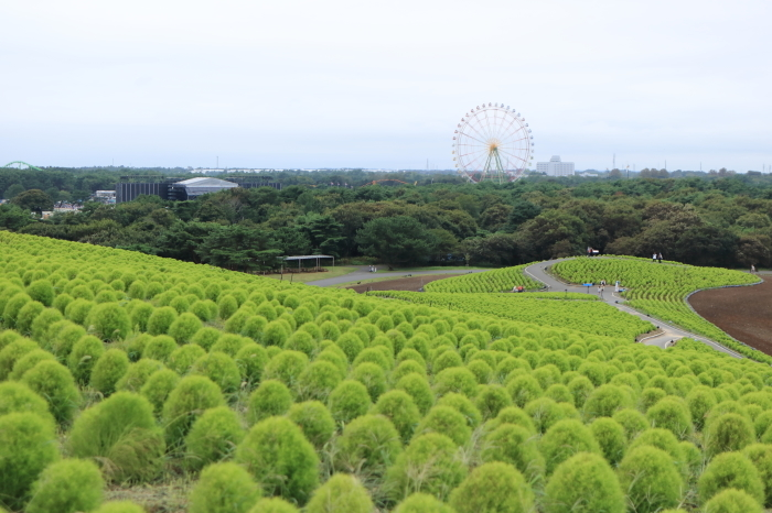 【ひたち海浜公園】埼玉ー茨城 - 6 -_f0348831_21455204.jpg