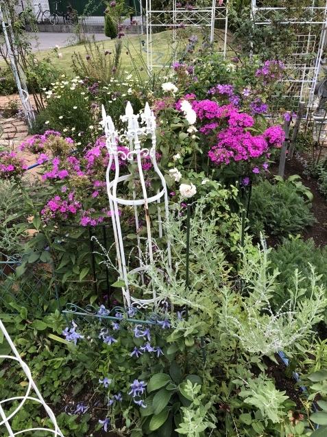 8月の庭「秋明菊、リコリス」咲きだしました_a0243064_09390349.jpg