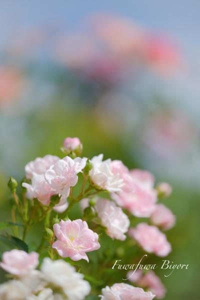久しぶりに花写真 **_d0344864_21202862.jpg